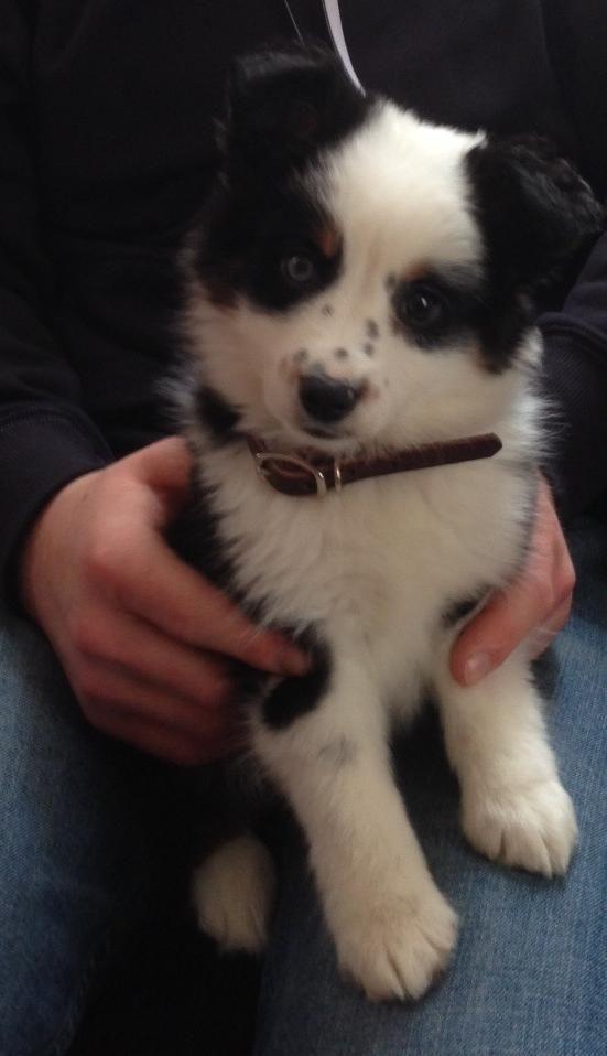 cute little doggy
