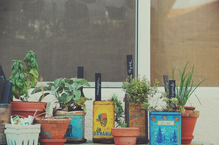 Very cool idea for growing herbs in old tin cans. This would look great outside my kitchen window.