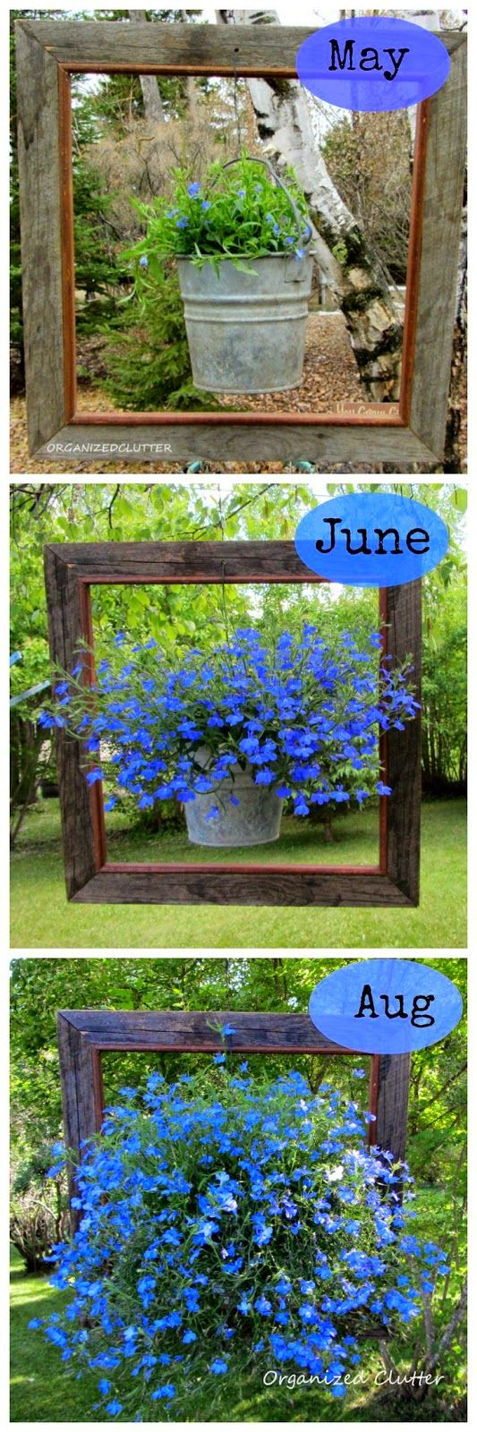"""I love this idea for my greenhouse! A different """"framed plant each month.This is will be fun! A Framed Lobelia...."""