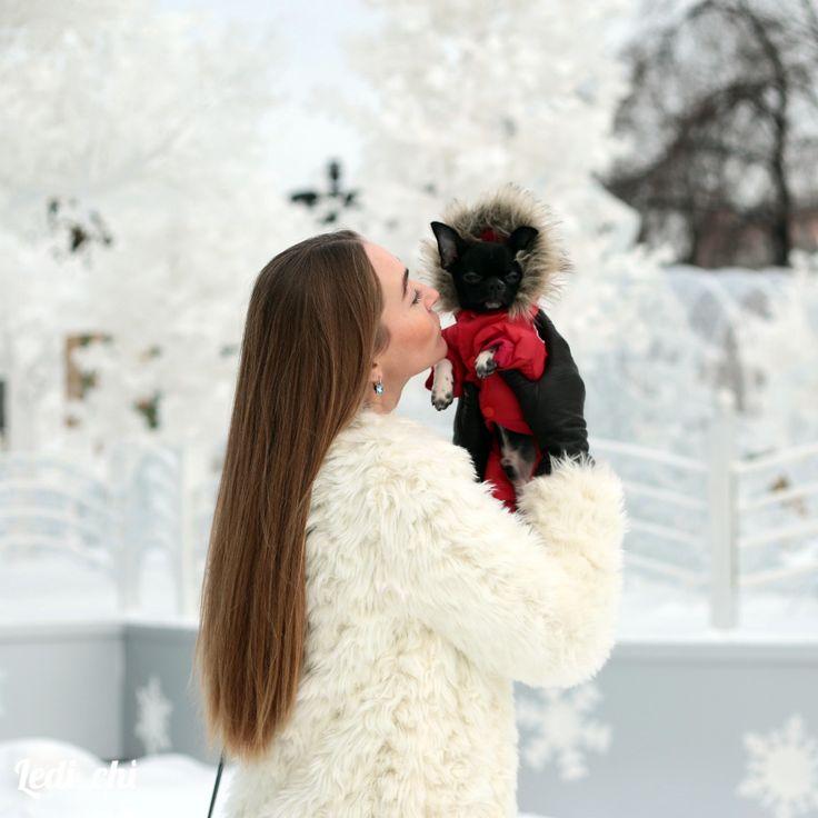 Когда человек заводит собаку, вместе с собакой он заводит рыжий осенний лес, туманный двор поутру, морозную луну над крышами, поляну в одуванчиках🌸🌻 Человек заводит себе собаку и мир становится больше🌎 Потому что человек берет собаку и выходит из своей коробки... -------------------------------------- Щенки в продаже здесь 👉 #Ledi_chi_щенкивпродаже ------------------------------------------- #собака #щенок #щеночки #хочусобаку #люблюсобак #куплючихуахуа #щенокчихуахуа #лучшийподарок…