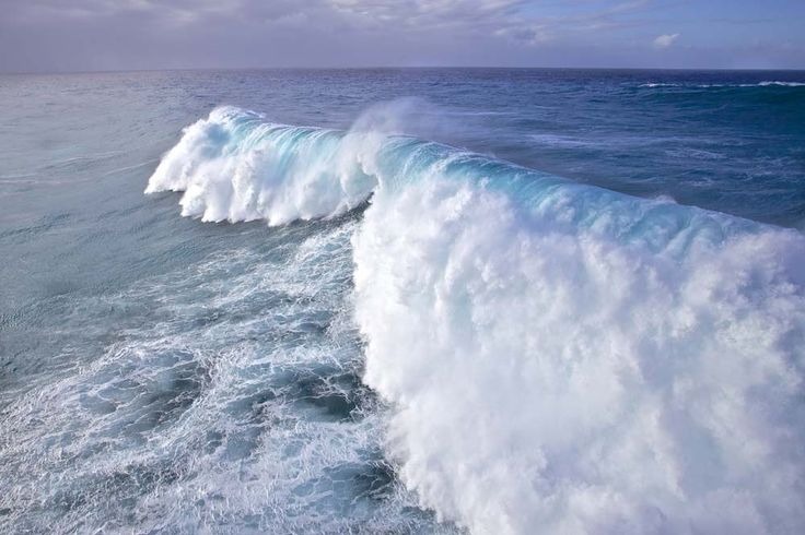 Largest swell in decades hits Hawaiian shores, 40-50 foot waves roll in Jan 22, 2014 By Rich Meiers