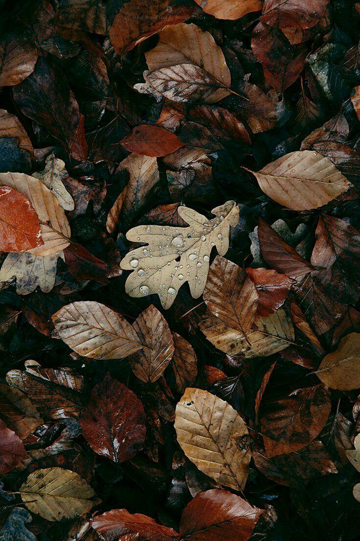 Download 4400 Koleksi Wallpaper Tumblr Leaves Gratis Terbaik
