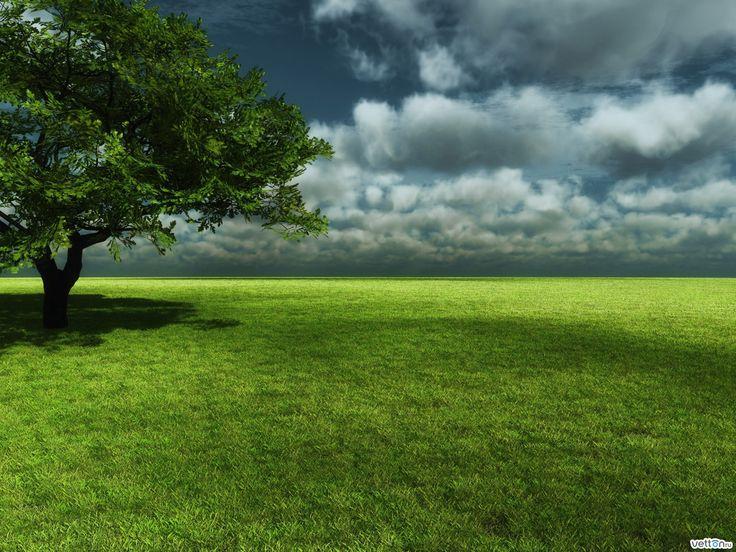 Обои №38157 2048x1536 / Поля / Природа / Vetton.ru | одинокое дерево