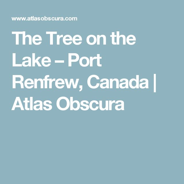 The Tree on the Lake – Port Renfrew, Canada | Atlas Obscura