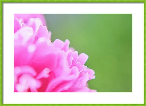 Peony Framed Print featuring the photograph Pink Waves by Marfffa Art