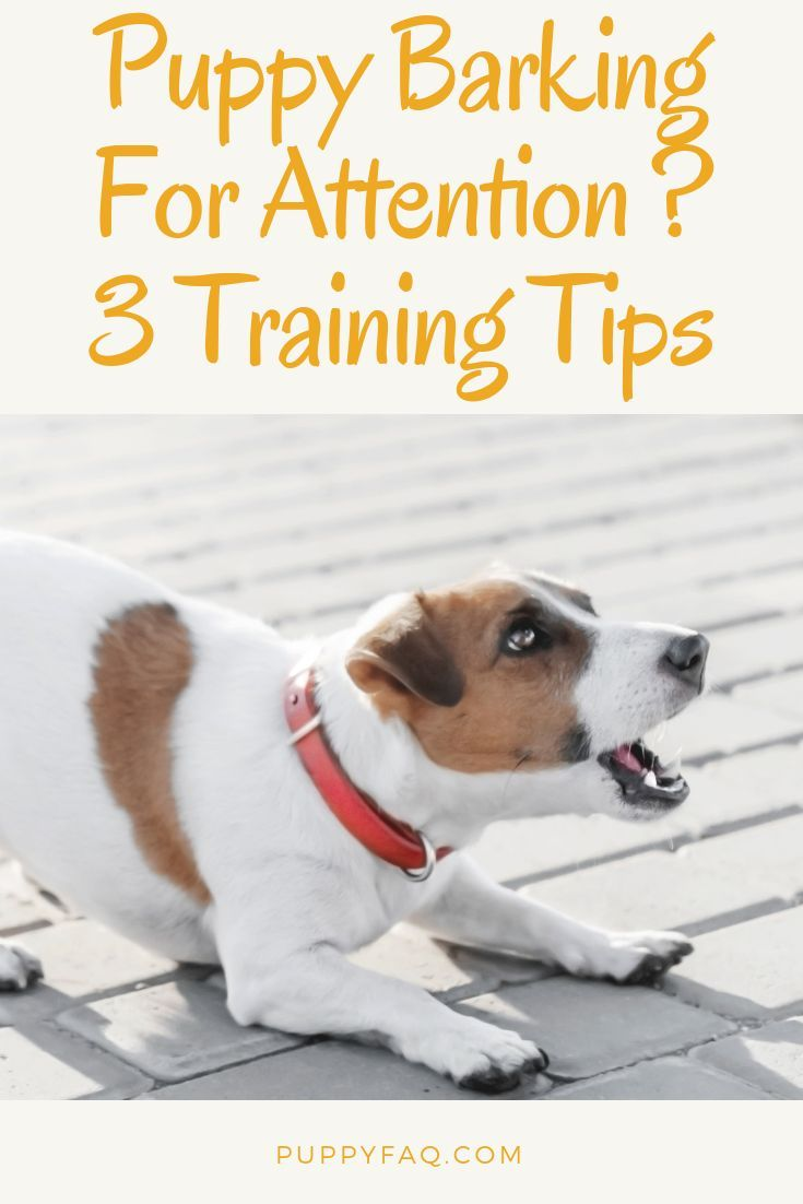 Puppy Barking For Attention Here S What To Do Puppy Barking