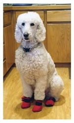Best Summer Dog Boots Meshies By Barko Booties Images On - Dog shoes for hardwood floors