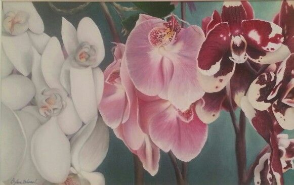 Phalaenopsis  Oil painting on linen canvas 55 x 65 cm