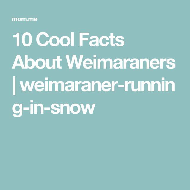 10 Cool Facts About Weimaraners | weimaraner-running-in-snow