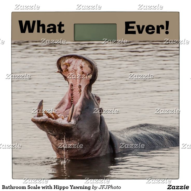 Bathroom Scale with Hippo Yawning