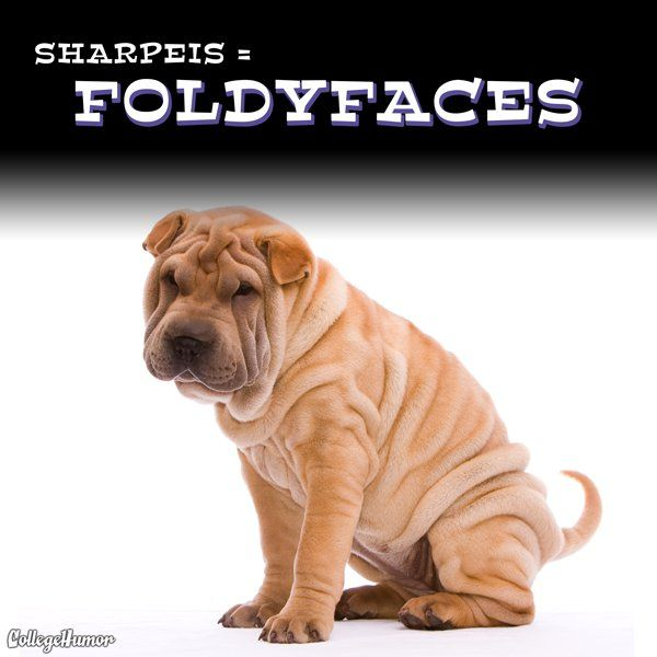 22 more accurate dog breed names