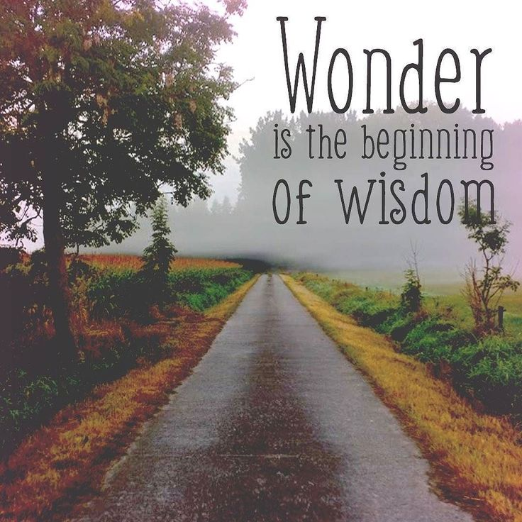 Wonder is the beginning of wisdom - #Socrates #quote #photooftheday #picoftheday #quoteoftheday #instagood #instadaily #mist  #wordporn #word #awe