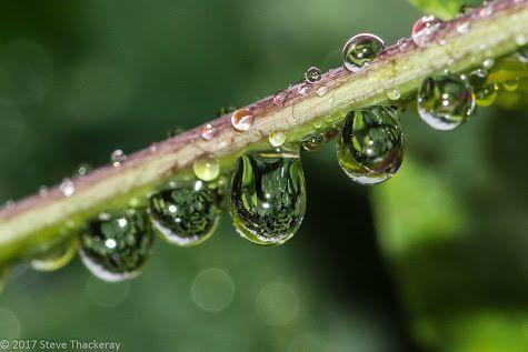 It's Raining! © Stephen Thackeray at Google+