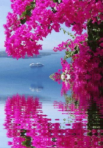 Flores e frases: APRENDI COM AS PRIMAVERAS...                                                                                                                                                     Mais