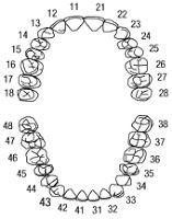 Αντιστοιχία Δοντιών - Οργάνων