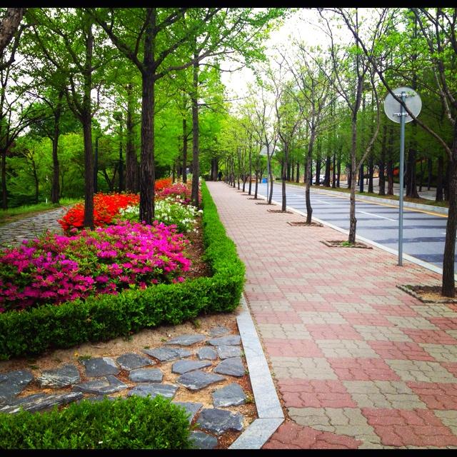 Ha.. Its too good a sight.. for anyone.. #Myongji #Korea #LateSpring