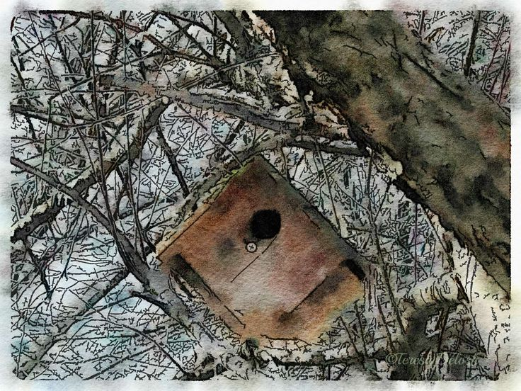 #Birdhouse in #Tree with #Snow 2 #Photograph