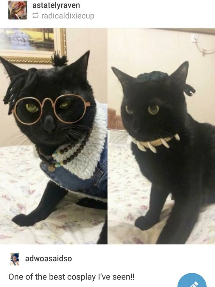 Who did this to their cat? 😂