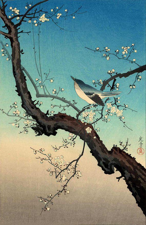Japanese birds flowers art prints, woodblock prints, paintings, Warbler Plum Tree Tsuchiya Koitsu FINE ART PRINT, Japanese prints, posters