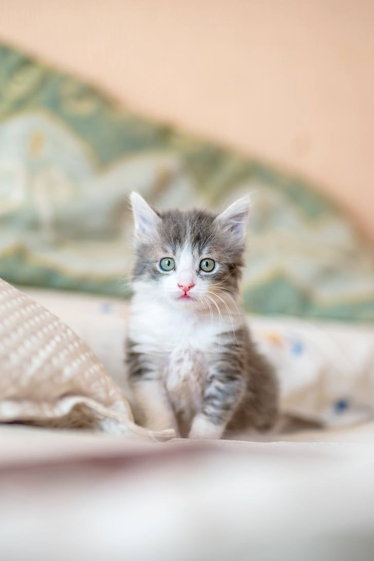 Literally Just 87 Photos Of Fluffy Adorable Cats That Ll Make Your Day Kittens Cutest Cute Animals Kitten Wallpaper