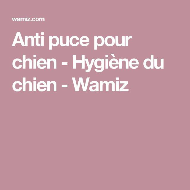 Anti puce pour chien - Hygiène du chien - Wamiz