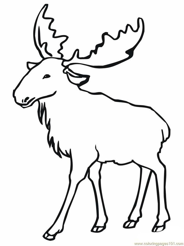 Collection Of Moose Coloring Pages For Kids Free Coloring Sheets Animal Coloring Pages Horse Coloring Pages Deer Coloring Pages