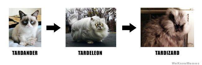 tard-the-cat-evolution