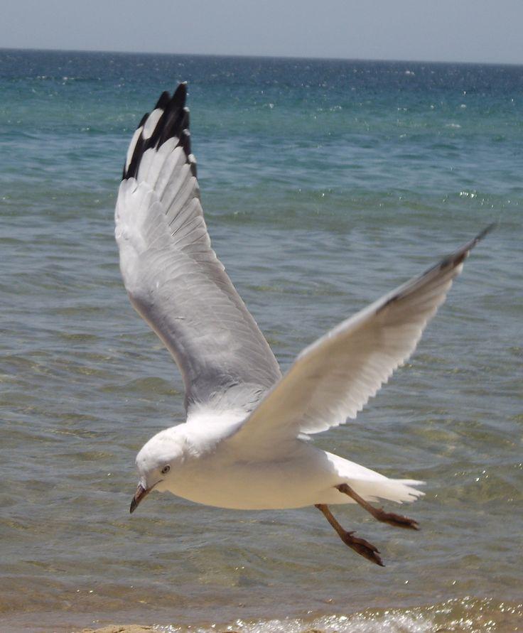 seagull - Google Search
