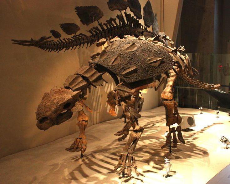 Opancerzone dinozaury – Euoplocephalus.