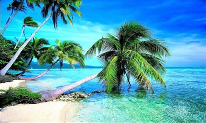 Buy Coconut Trees Beach Diamond Painting Kit Up To 30 Off Pretty Neat Creative Beach Wallpaper Attractive Wallpapers Hd Wallpapers For Pc