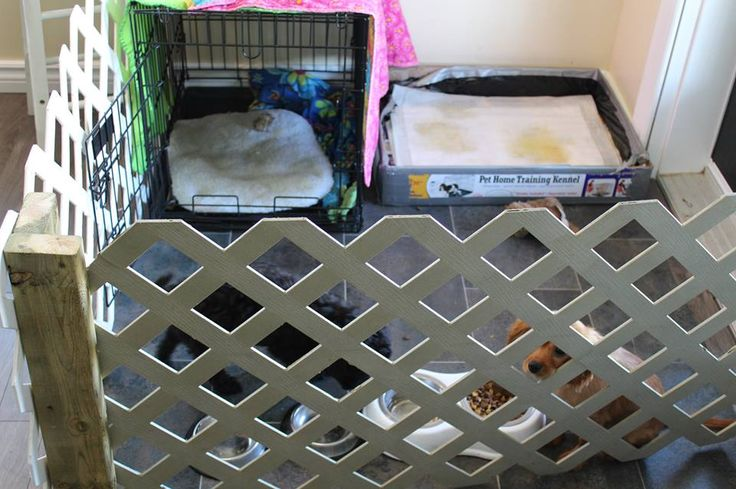 how to keep puppies from peeing in their kennel
