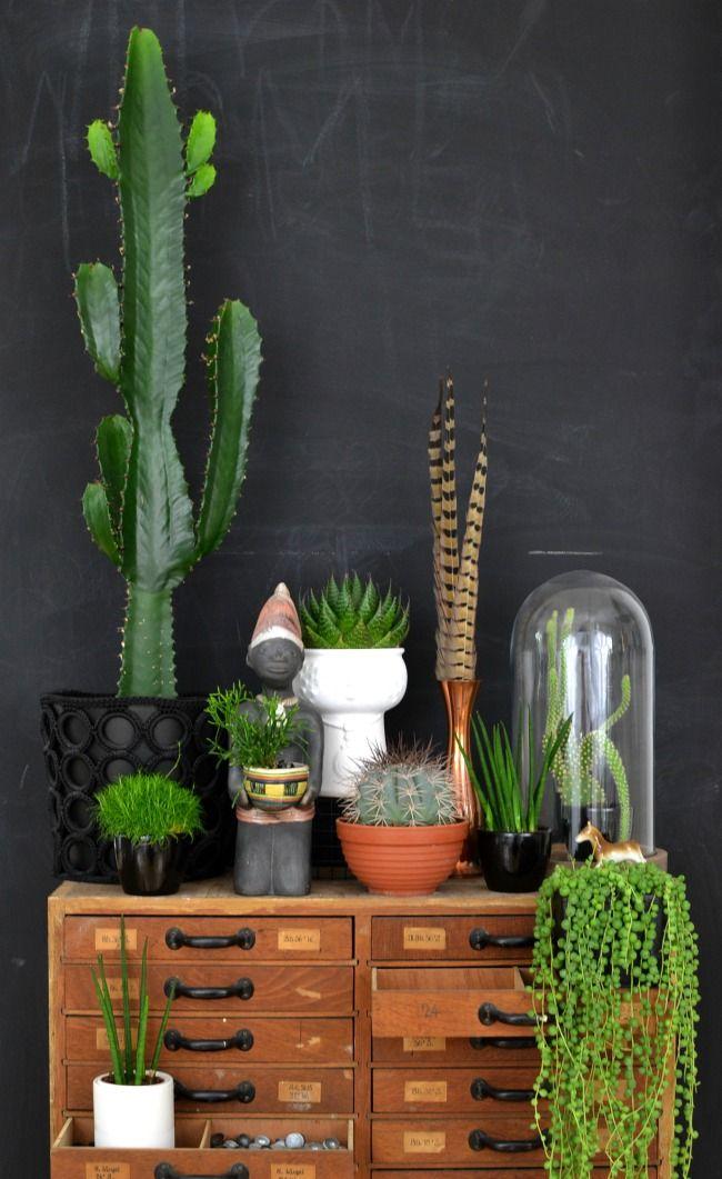 Planten verzameling op kast