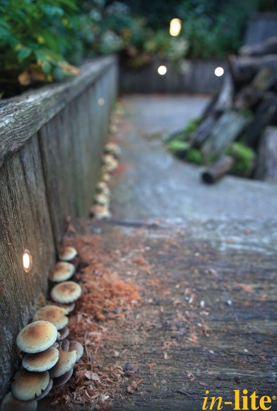 DB LED | vlonder | De tuinen van Appeltern | herfst