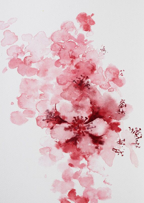 Cherry blossom watercolor close up More