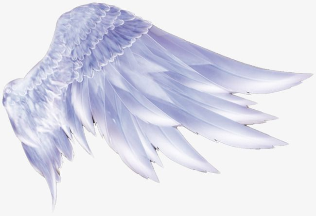 Angel Wings Png And Clipart Angel Wings Drawing Wings Drawing Cartoon Angel Wings