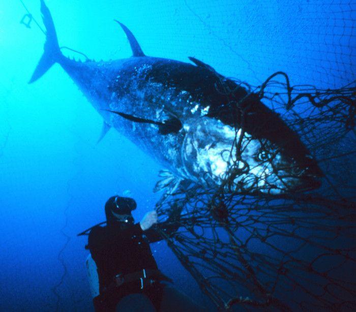 InfoNavWeb                       Informação, Notícias,Videos, Diversão, Games e Tecnologia.  : Atum gigante surge encalhado em praia