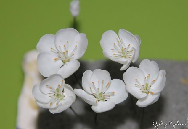 Веточка цветущей вишни «  Керамическая флористика. Цветы из холодного фарфора. Уроки и мастер-классы