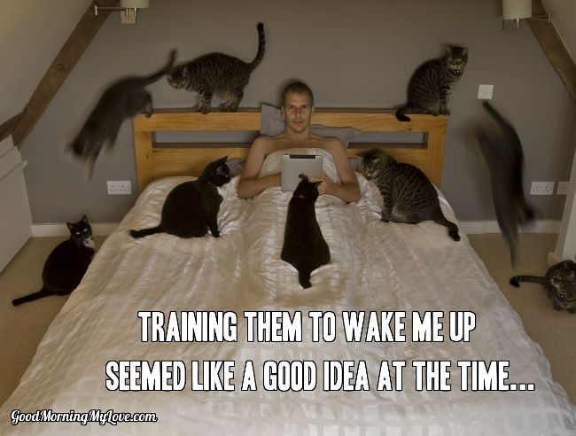 Free Good Morning Memes And Images Crazy Cats Funny Good Morning Memes Cats