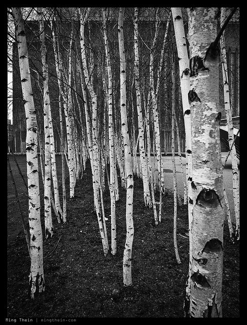 By Ming Thein, _0011006bw copy by mingthein, via Flickr