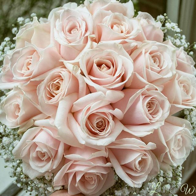 gorgeous blush pink rose bouquet with gypsophila collar