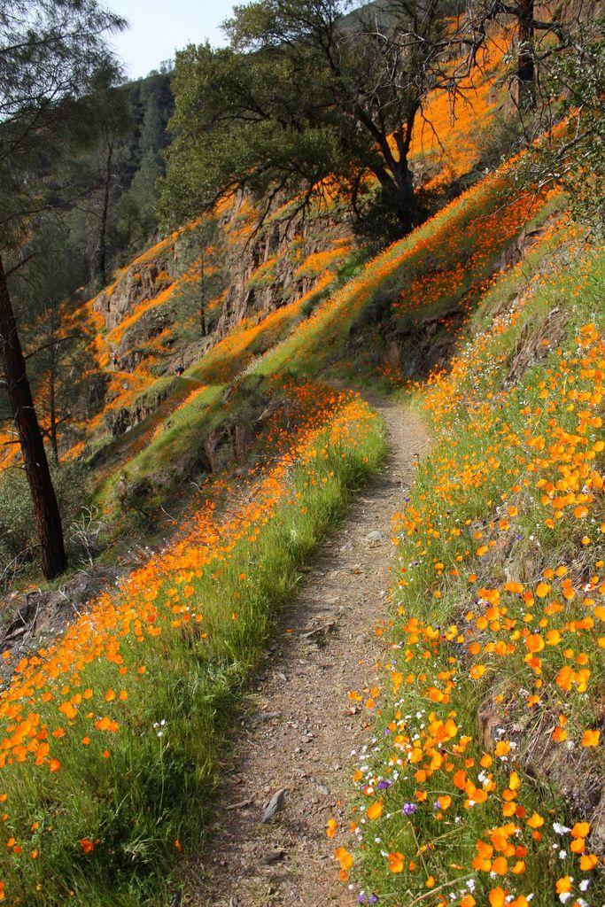 Wildflower Path Merced River near Yosemite California