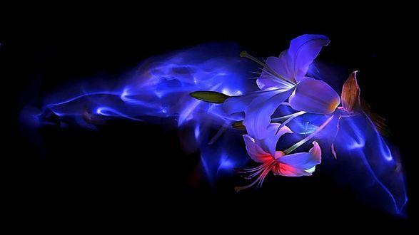 Обои Белые лилии с розовой подсветкой и синим дымом, на черном фоне