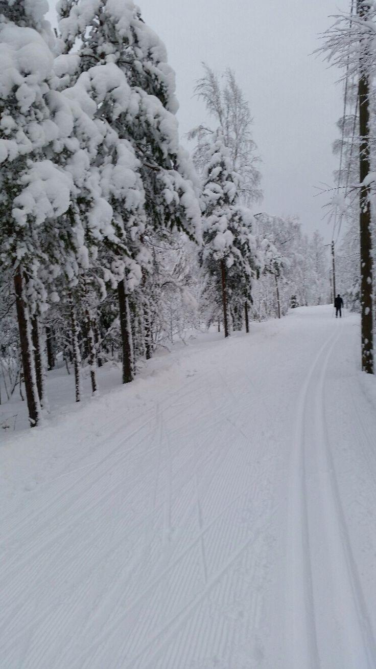 Track to ski in south east Finland Uudenkylän harju.Feb  2015.