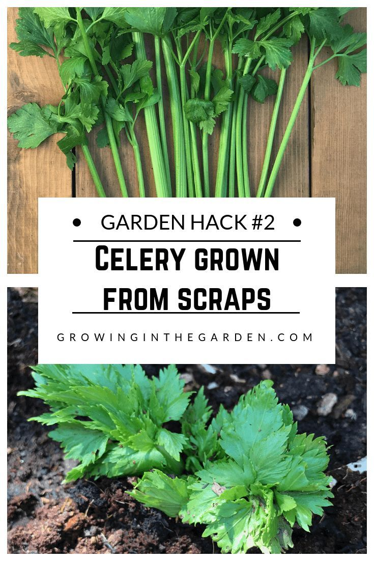 garden hacks 9 simple tips for the garden growing a vegetable rh pinterest com