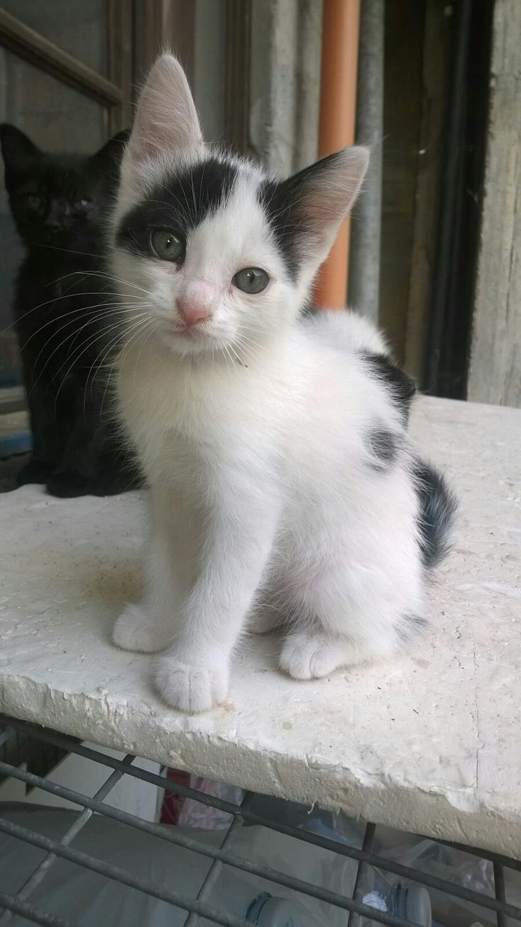 Mejores 30 Im Genes De Gatti En Pinterest Gatitos Cute Kittens  # Muebles Gatti Rosario