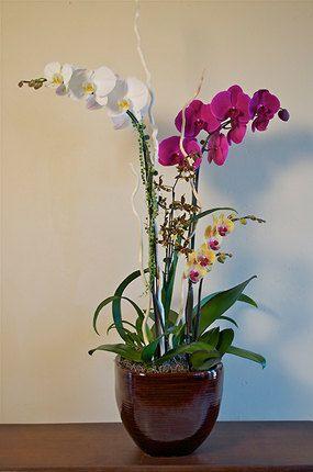 45 Best Orchid Arrangements Images On Pinterest Orchid