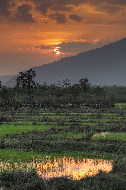 Sunset over the paddys near Champasak, Laos