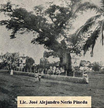 Ceiba legendaria del municipio de Izalco por el año 1910.