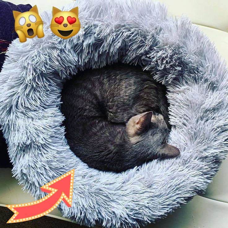 Comforting Donut Shaped Bed that makes Kitties Feel Warm and Safe!🐈💕 This Marshmallow Bed Eases Anxiety in Kitties and has a Calming Effect on them 😻 Modern Design looks Great in any Home . 👆Click The Link in Description!☝️ . .  I got this bed for my cats and they absolutely loved it! Please use the link in the description to get one for your kitty! :) . . #catlove #catlovers #cutecat #kittens #kittensofinstagram #catvalentine #catloaf #catsitting #purr #catloversclub #kittylove