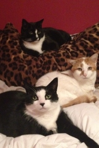 Jersey Shore's favorite guidette, Snooki's cats. Find out ...